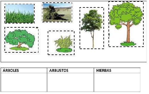 Canalred Plantillas Para Colorear De Arboles Dibujos: Dibujos Para Colorear Arboles Arbustos Hierbas Arbusto De
